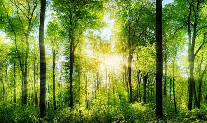 Die NOVUM Group setzt auf erneuerbare Energien